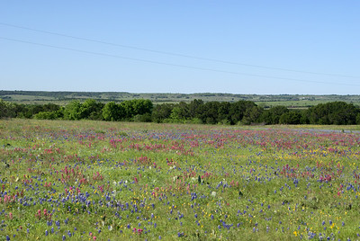Variety of colors in a field near Chalk Mountain, TX.