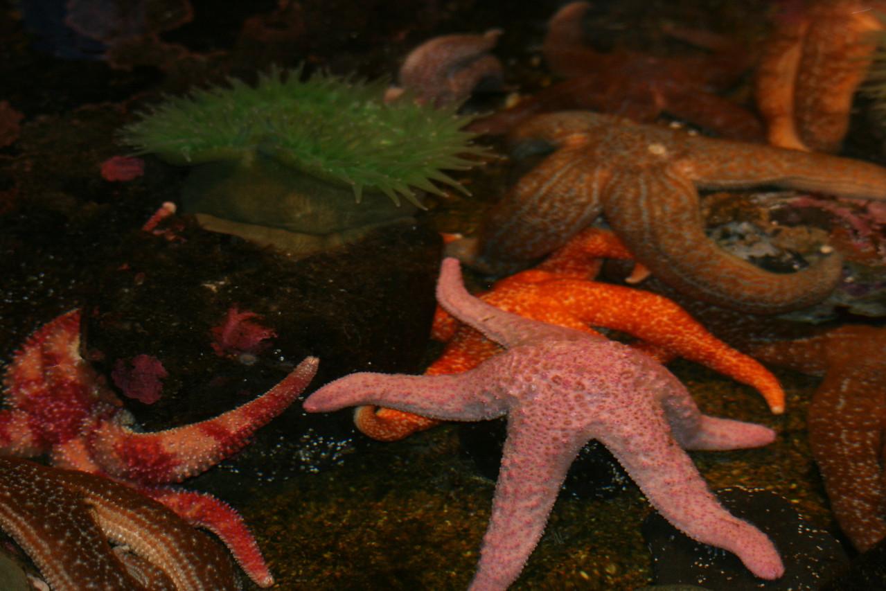 Starfish at Aquarium