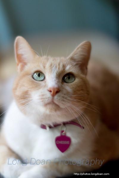 Chessie Cat