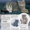 Amber_Cat_Magazin-016