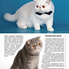 Amber_Cat_Magazin-018