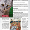 Amber_Cat_Magazin-008