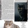 Amber_Cat_Magazin-015