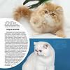 Amber_Cat_Magazin-020