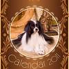 Amber_Dog-Cat_2011-001