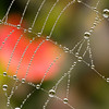 Spiderweb with morning dew