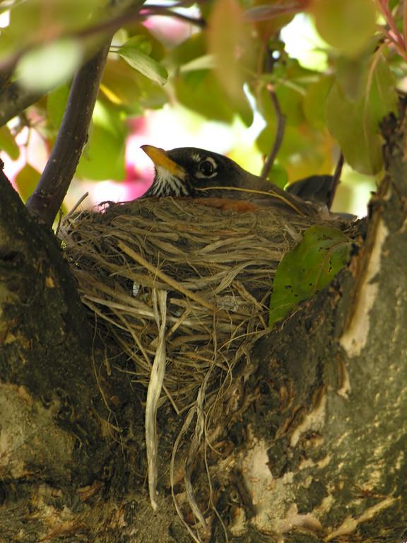 Passerines (song birds)