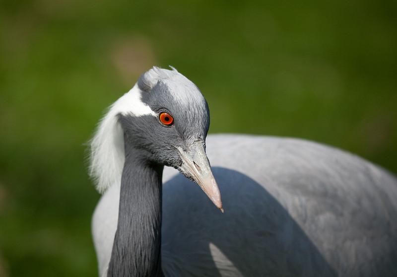 """Crane. <a href=""""http://www.wereldtuinenmondoverde.nl/index.php?id=18"""">Mondo Verde</a>, Landgraaf, Netherlands."""