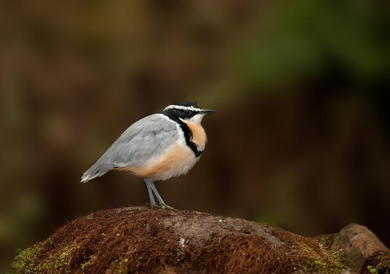 """Bird, <a href=""""http://www.wereldtuinenmondoverde.nl/index.php?id=18"""">Mondo Verde</a>, Landgraaf, Netherlands."""