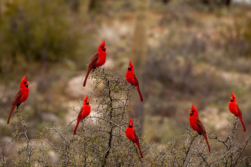 Cardinal Distancing