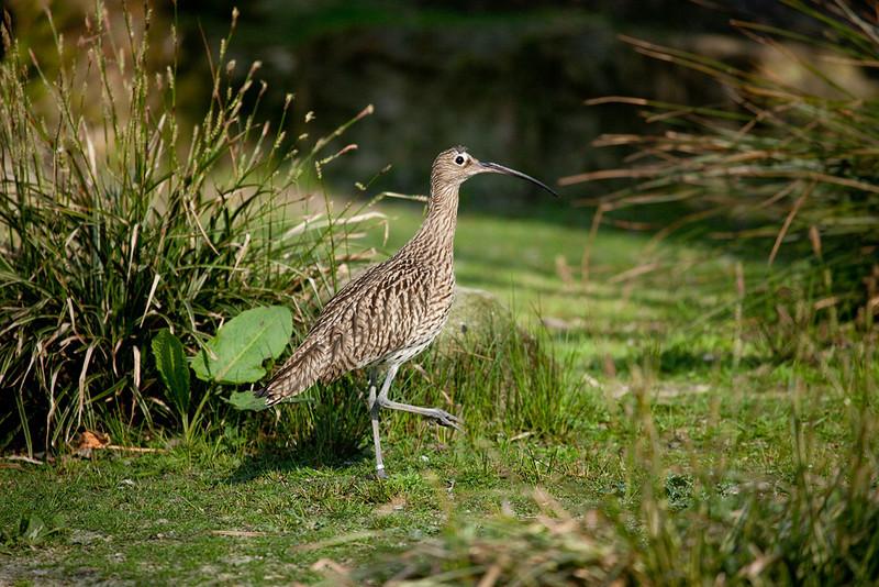 """Bird. <a href=""""http://www.wereldtuinenmondoverde.nl/index.php?id=18"""">Mondo Verde</a>, Landgraaf, Netherlands."""