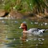 """Duck. <a href=""""http://www.wereldtuinenmondoverde.nl/index.php?id=18"""">Mondo Verde</a>, Landgraaf, Netherlands."""