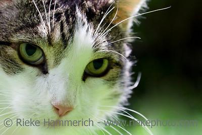 cat portrait - waiting for prey - adobe RGB