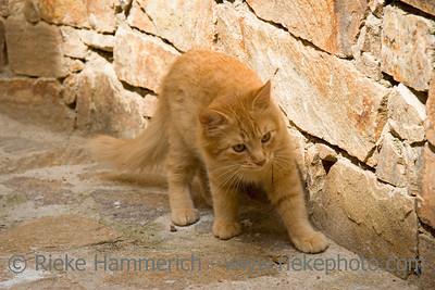 kitty cat - exploring a french village - adobe RGB