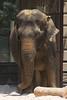 National Zoo - Elephants 06-01