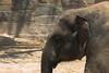 National Zoo - Elephants 08-01