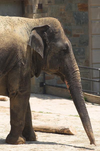 National Zoo - Elephants 01-01