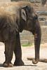 National Zoo - Elephants 03-01