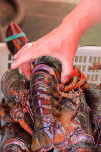 Hand holding Lobster – Seafood on Street Market in Chinatown, Vancouver, British Columbia, Canada