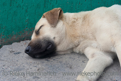 Sleeping dog - San Jose, Costa Rica