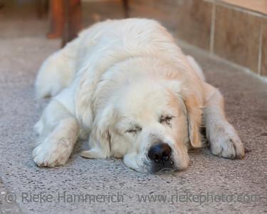 Sleeping Dog - Kas, Antalya Province, Turkey, Asia