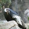 2010, 05-27 Zoo (327)