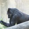 2010, 05-27 Zoo (447)