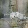2010, 05-27 Zoo (180)