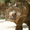 2010, 05-27 Zoo (172)