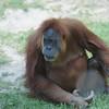 2010, 05-27 Zoo (492)