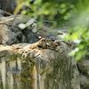 2010, 05-27 Zoo (189)