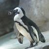 2010, 05-27 Zoo (369)