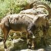 2010, 05-27 Zoo (237)