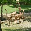 2010, 05-27 Zoo (224)