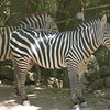 2010, 05-27 Zoo (203)