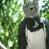 2010, 05-27 Zoo (332)