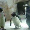 2010, 05-27 Zoo (367)