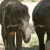 2010, 05-27 Zoo (133)