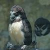 2010, 05-27 Zoo (344)