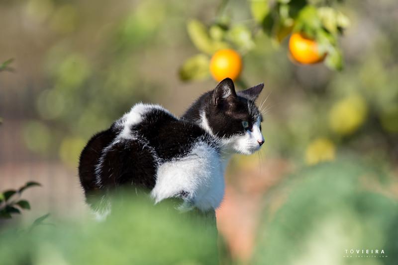 Gatos no Jardim