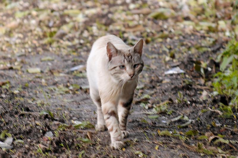 Gato<br /> Oliveirinha 13Abr2008
