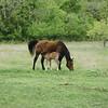 2010, 04-17 b  Horses (115)