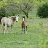 2010, 04-17 b  Horses (111)