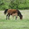2010, 04-17 b  Horses (118)