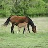 2010, 04-17 b  Horses (119)