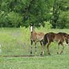 2010, 04-17 b  Horses (107)