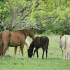 2010, 04-17 b  Horses (106)