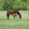 2010, 04-17 b  Horses (117)