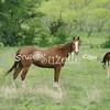 2010, 04-17 b  Horses (102)