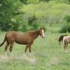 2010, 04-17 b  Horses (101)